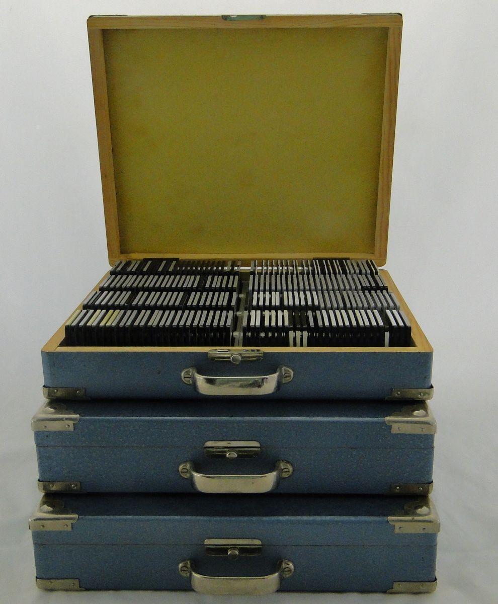 DSC06694.JPG (990×1200)